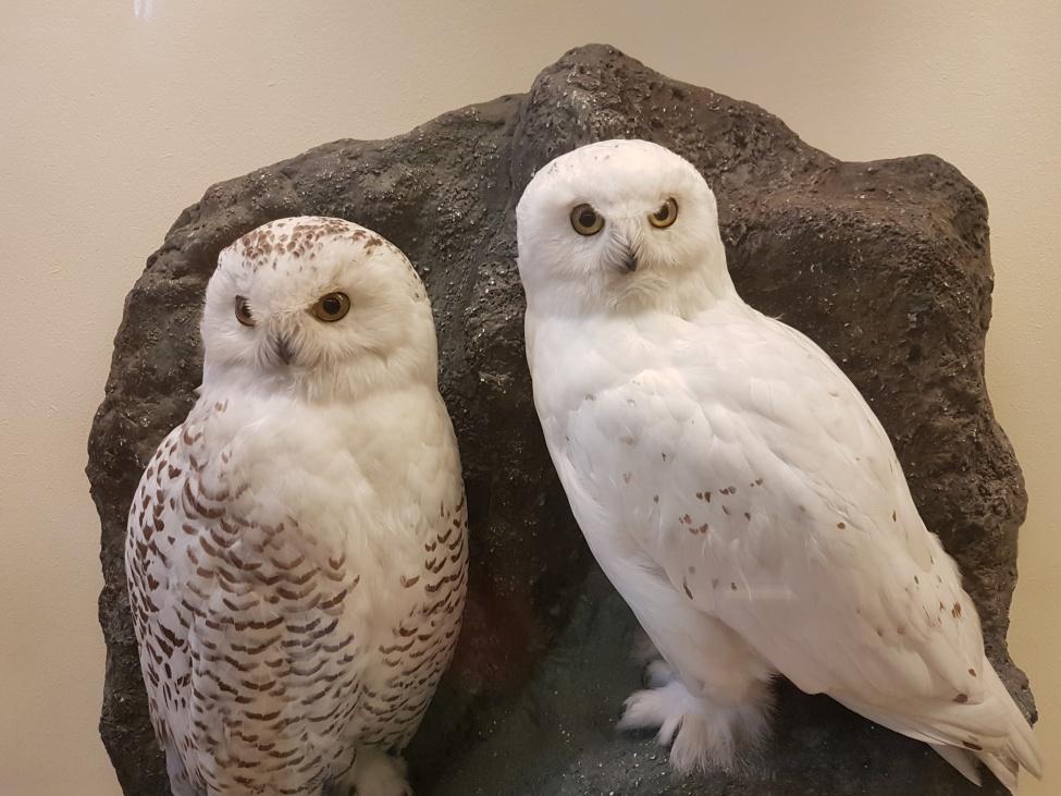 Muzeum Historii Naturalnej Wiedeń