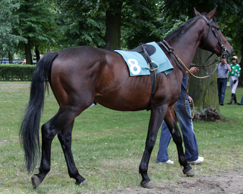 Horseback Riding in Janów