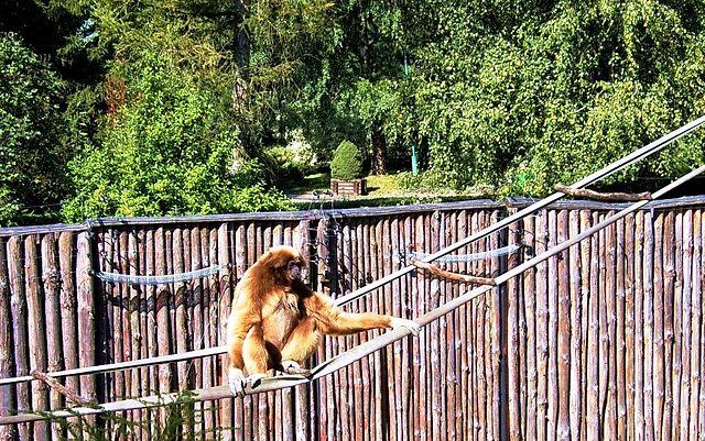 Stefan Miler Zoo