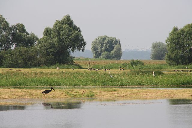Warta Estuary National Park