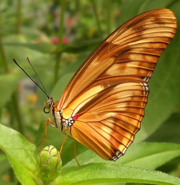Arthropoda Butterfly Museum