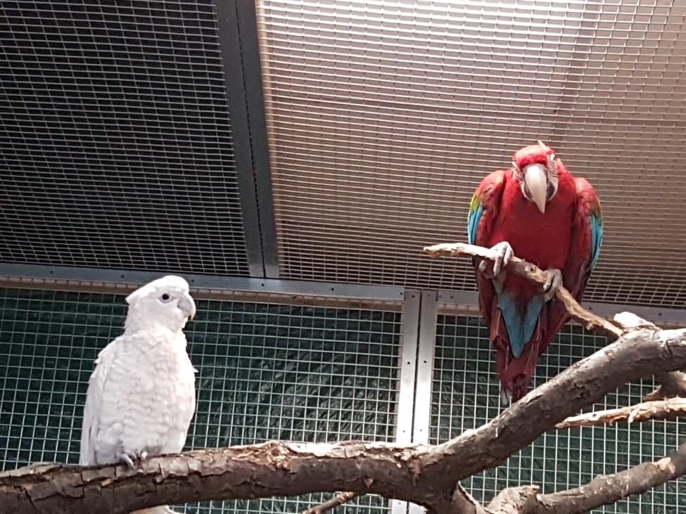 Papugarnia Carmen Warszawa