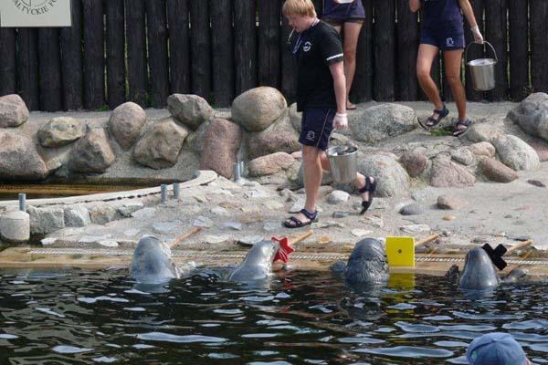 Seal Centre in Hel