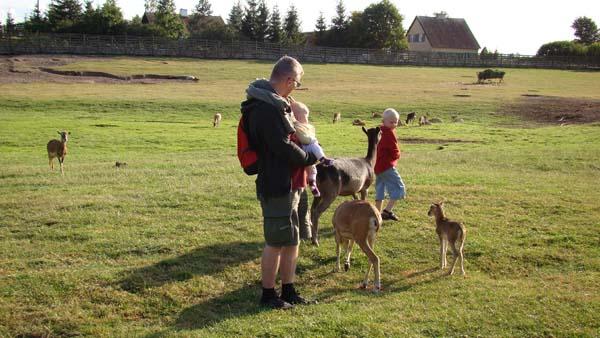 Kadzidłowo Wild Animals Park