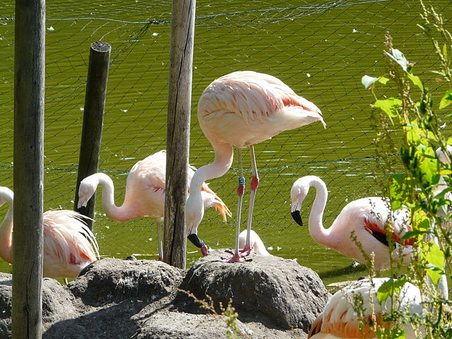 New Zoo in Poznan