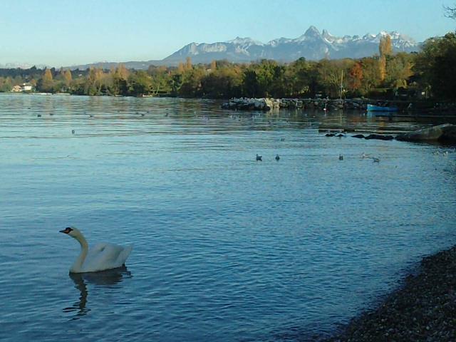 Ships on the Geneva Lake