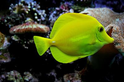 Mořský svět Zoo