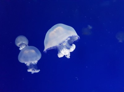 Największe oceanarium w Europie: L'Oceanogràfic