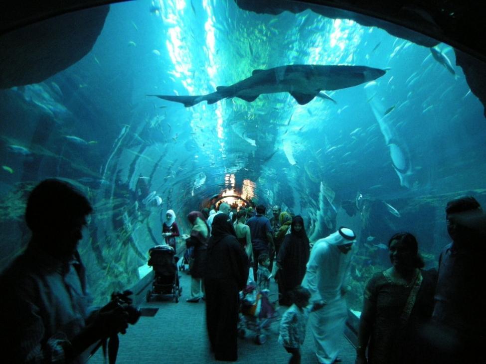 Akwarium w Dubaju