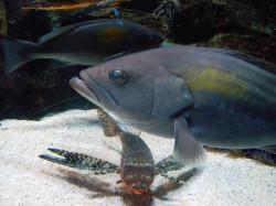 aquario2003.JPG