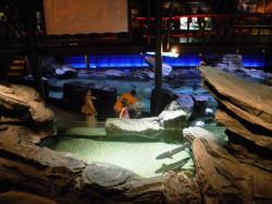 aquario2060.JPG