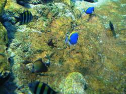 aquario2097.JPG