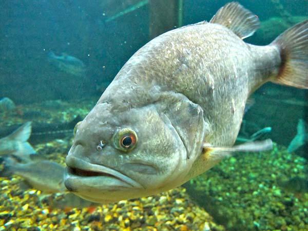 Aquarium du Val de Loire - Akwarium Doliny Loary