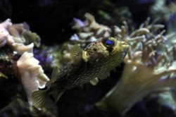 aquarium_bcn_5584381799_b07.jpg