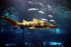 aquarium_bcn_5584382601_1f2.jpg