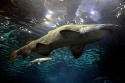aquarium_bcn_5584382695_439.jpg