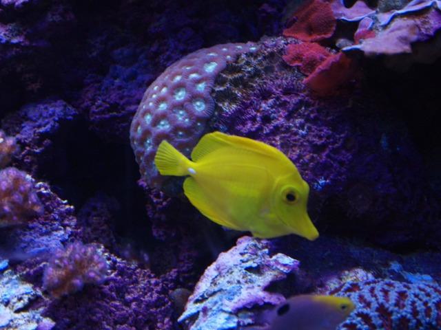 Aquarium Tropical i Palais de la Porte Doree