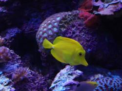 aquarium_porte_doree_6491223403_c476dda536_o.jpg