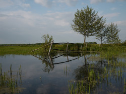 biebrzanski_park_narodowy_1.jpg