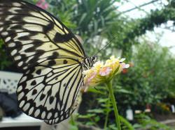bornholms-sommerfuglepark2.jpg