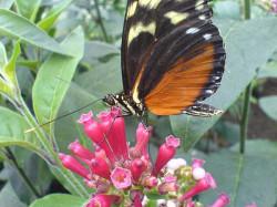bornholms-sommerfuglepark3.jpg