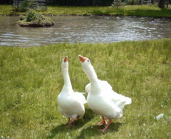 Cefn Mably Farm Park
