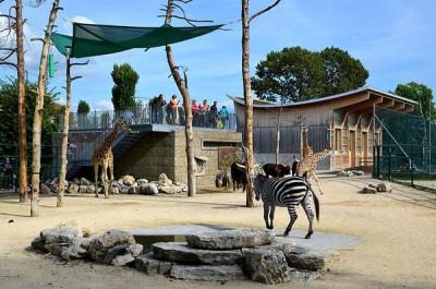 Zoo dla dzieci Knie (Knies Kinderzoo)