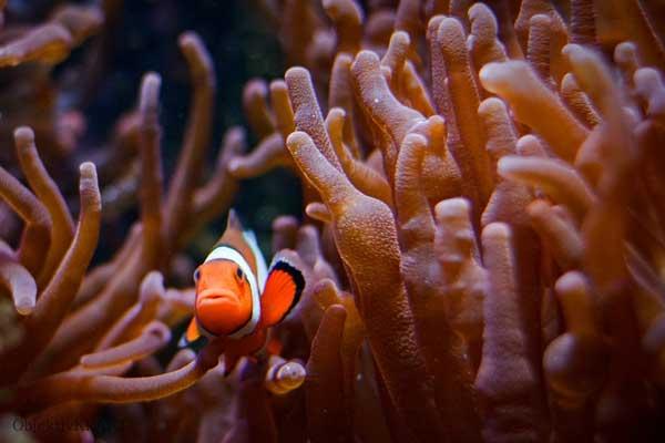 Sea Life Koenigswinter