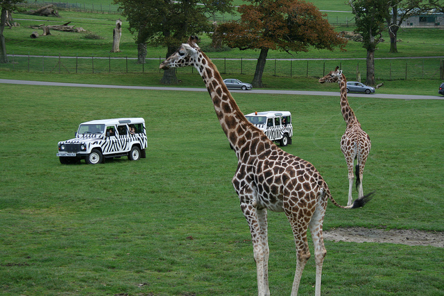 Longleat Safari & Adventure Park