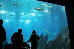 oceanarium_lizbona_5.jpg