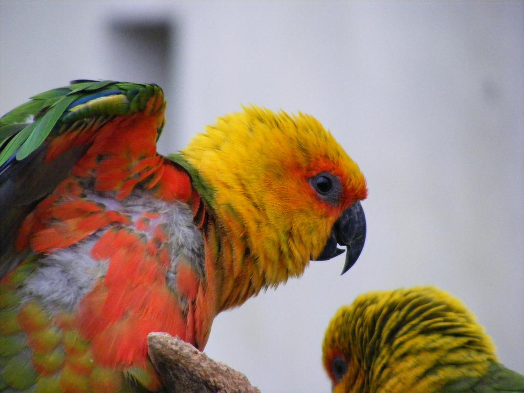 Ogród zoologiczny w Opolu