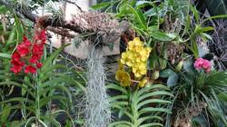 palmiarnia-gliwice2.jpg