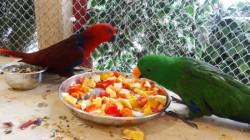 papugarnia1.jpg