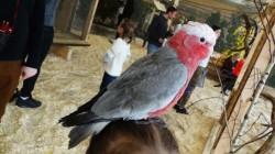 papugarnia2.jpg