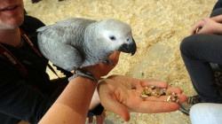 papugarnia4.jpg