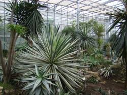 powsin-ogrod-botaniczny2.jpg