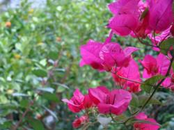 powsin-ogrod-botaniczny3.jpg