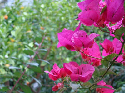 Powsin Botanical Garden