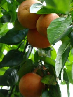 powsin-ogrod-botaniczny4.jpg