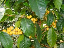 powsin-ogrod-botaniczny5.jpg