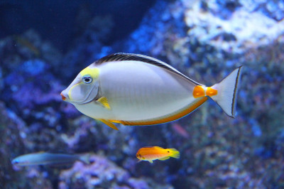 Oceanarium w Kołobrzegu