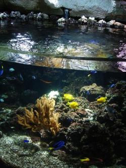 sea_life_val_deurope_poissons_tropicaux.jpg