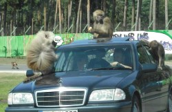 serengeti_park_3852560338_9.jpg