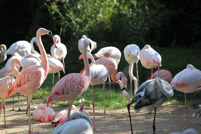 Park dzikiej przyrody (Parco natura viva)