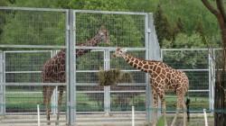 zoo-w-chorzowie3.jpg